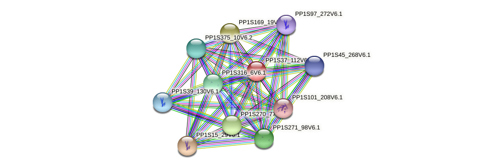 PP1S37_112V6.1 protein (Physcomitrella patens) - STRING interaction network
