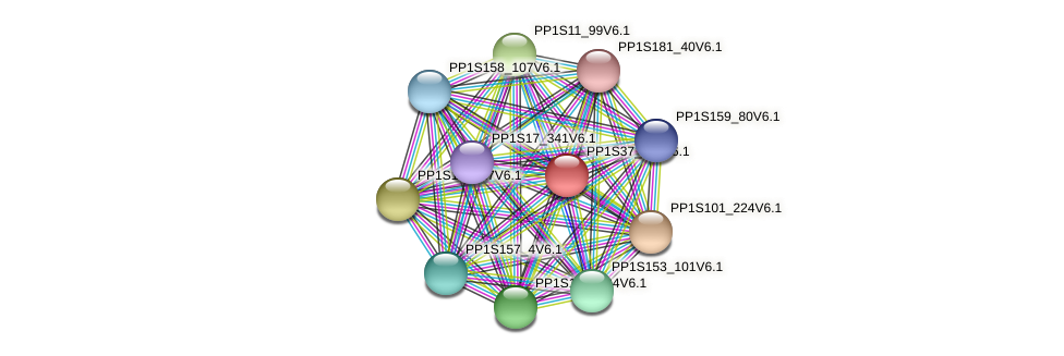 PP1S37_117V6.1 protein (Physcomitrella patens) - STRING interaction network