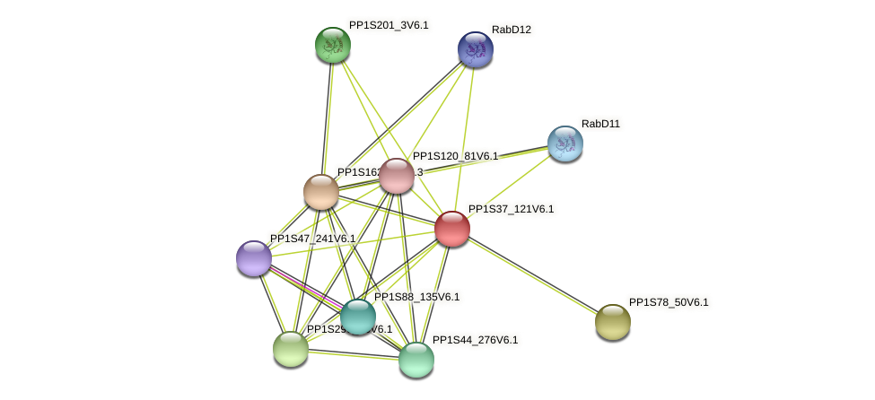 PP1S37_121V6.1 protein (Physcomitrella patens) - STRING interaction network