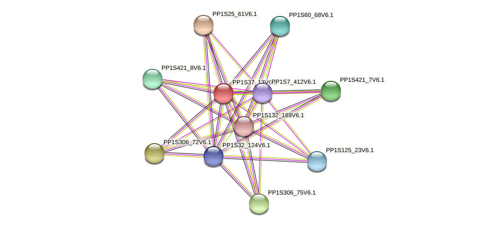 PP1S37_13V6.1 protein (Physcomitrella patens) - STRING interaction network
