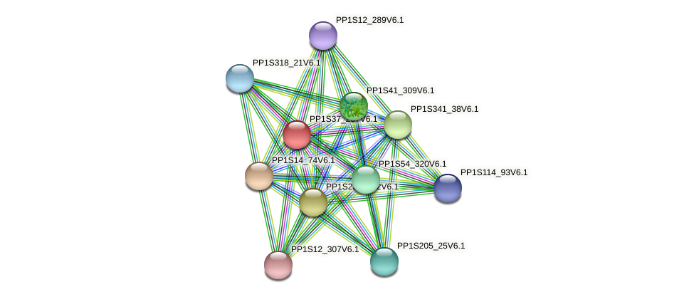 PP1S37_237V6.1 protein (Physcomitrella patens) - STRING interaction network