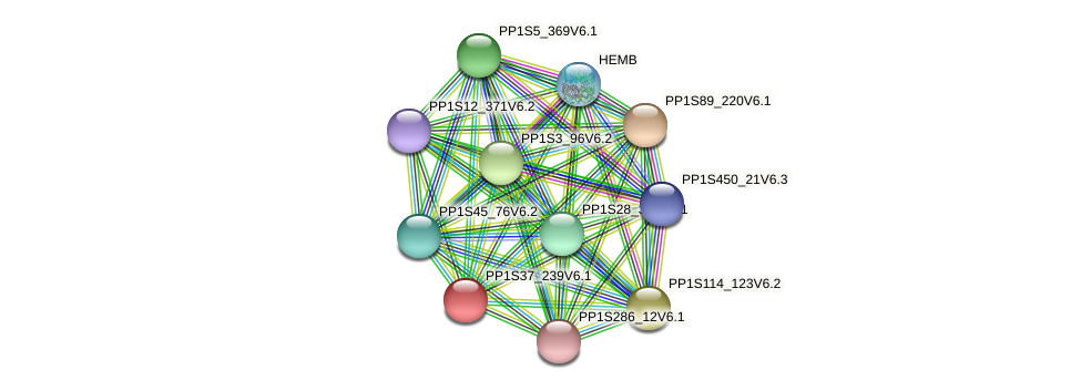 PP1S37_239V6.1 protein (Physcomitrella patens) - STRING interaction network