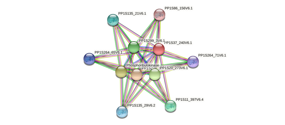PP1S37_240V6.1 protein (Physcomitrella patens) - STRING interaction network