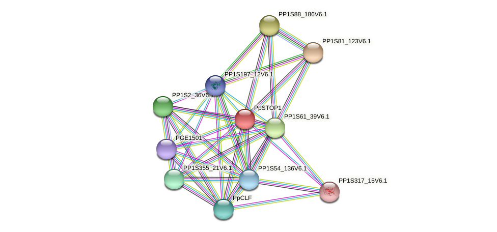 PP1S37_244V6.1 protein (Physcomitrella patens) - STRING interaction network