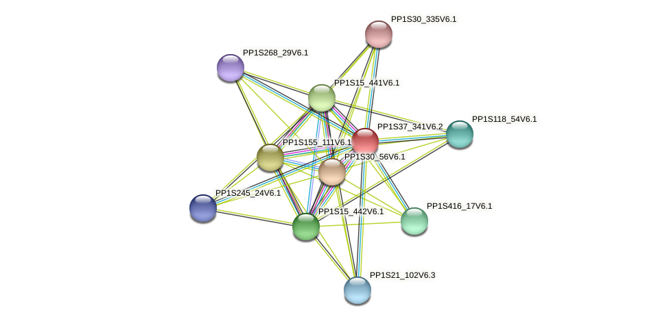 PP1S37_341V6.1 protein (Physcomitrella patens) - STRING interaction network
