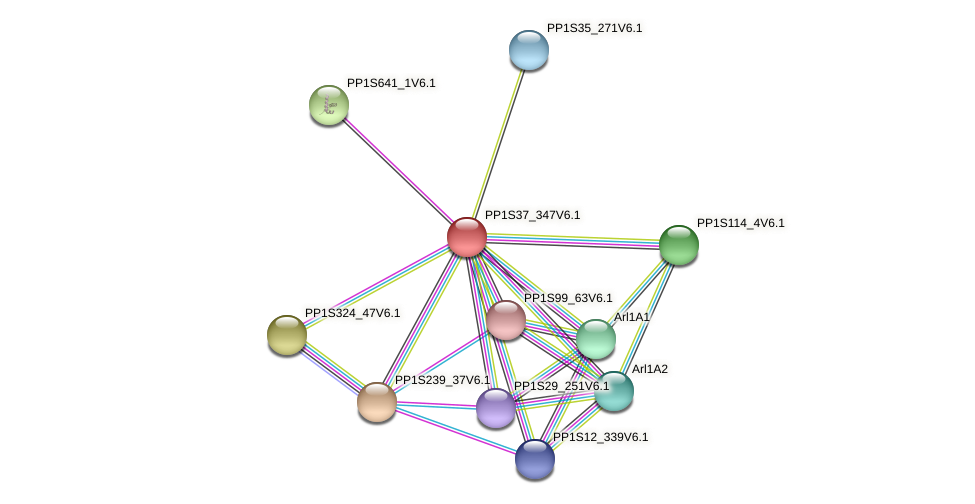 PP1S37_347V6.1 protein (Physcomitrella patens) - STRING interaction network