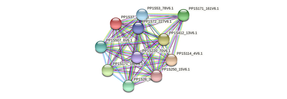 PP1S37_348V6.1 protein (Physcomitrella patens) - STRING interaction network