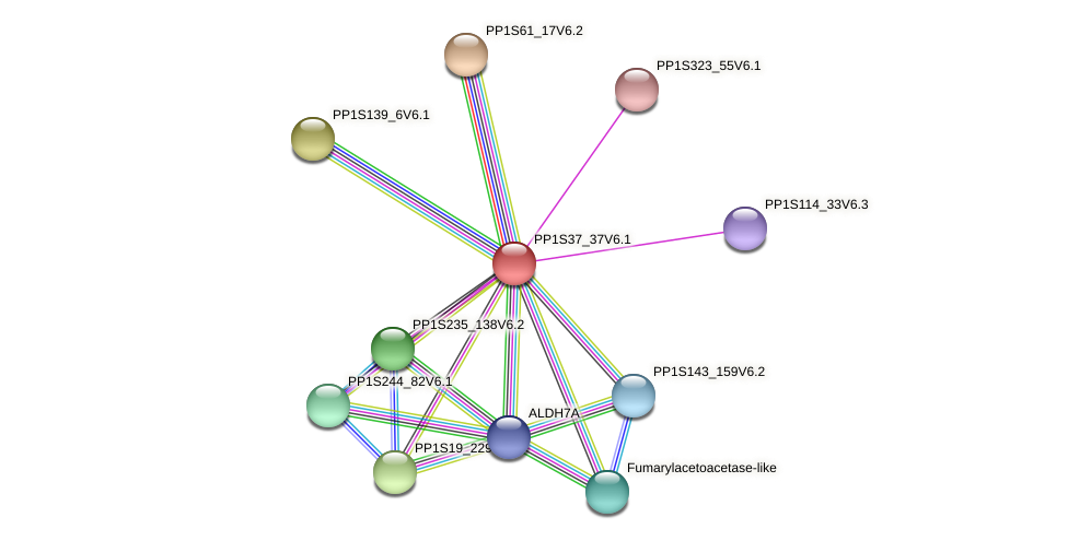 PP1S37_37V6.1 protein (Physcomitrella patens) - STRING interaction network