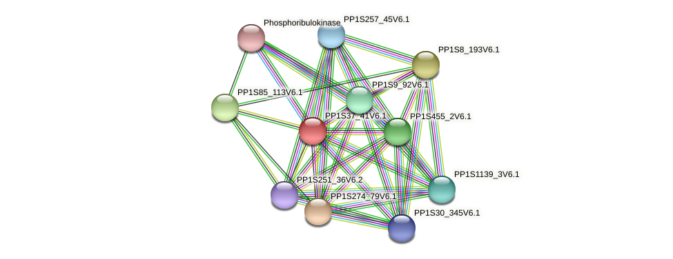 PP1S37_41V6.1 protein (Physcomitrella patens) - STRING interaction network