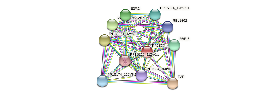 PP1S37_43V6.1 protein (Physcomitrella patens) - STRING interaction network