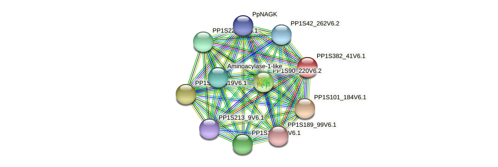 PP1S382_41V6.1 protein (Physcomitrella patens) - STRING interaction network