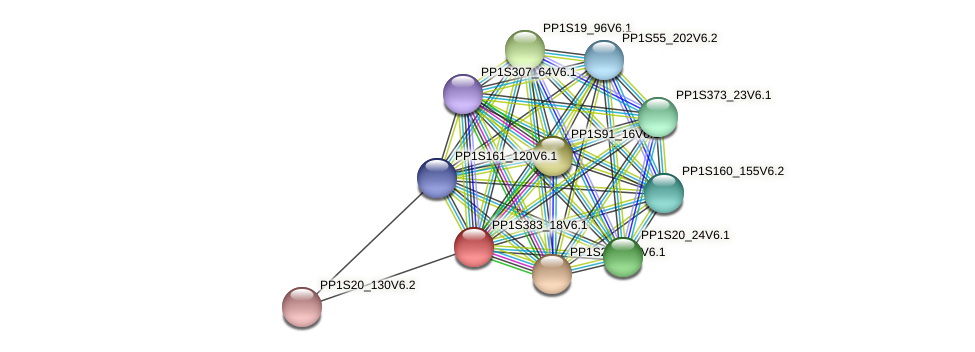 PP1S383_18V6.1 protein (Physcomitrella patens) - STRING interaction network