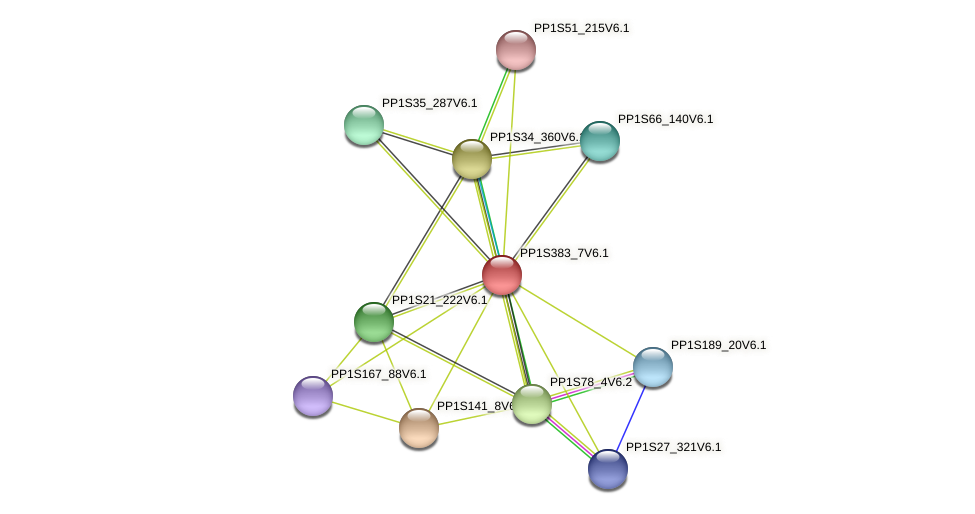 PP1S383_7V6.1 protein (Physcomitrella patens) - STRING interaction network