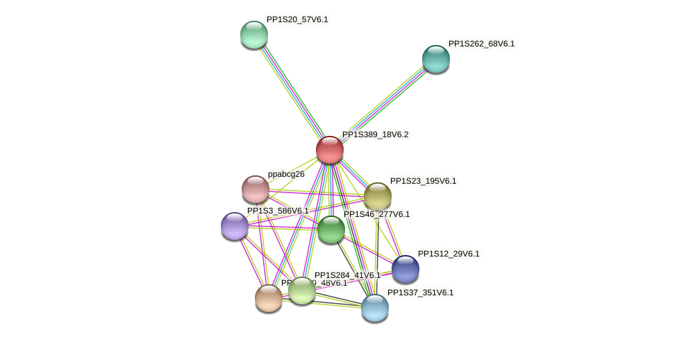 PP1S389_18V6.2 protein (Physcomitrella patens) - STRING interaction network