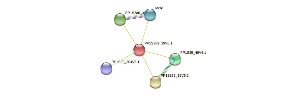 PP1S389_19V6.1 protein (Physcomitrella patens) - STRING interaction network