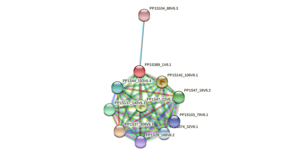 PP1S389_1V6.1 protein (Physcomitrella patens) - STRING interaction network