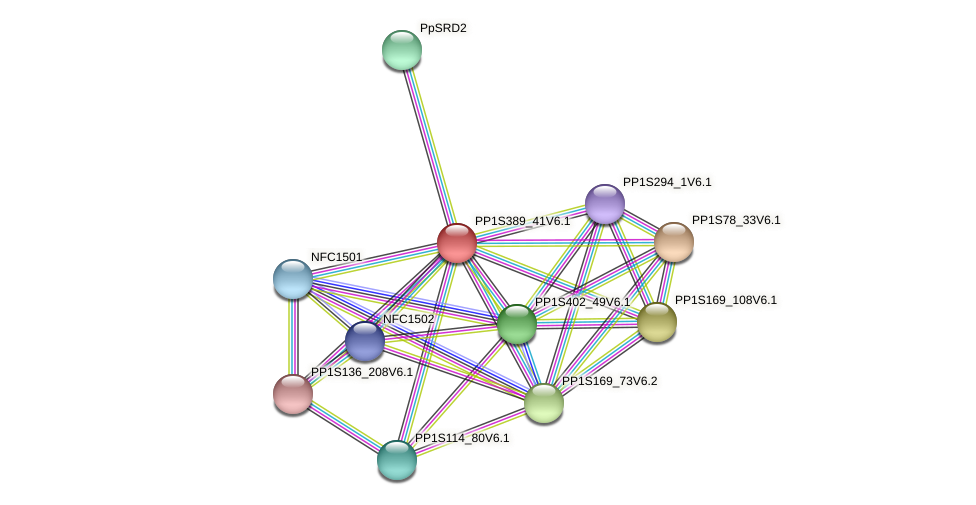 PP1S389_41V6.1 protein (Physcomitrella patens) - STRING interaction network