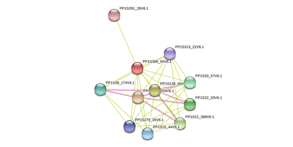PP1S389_55V6.1 protein (Physcomitrella patens) - STRING interaction network