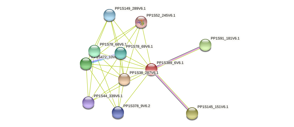 PP1S389_6V6.1 protein (Physcomitrella patens) - STRING interaction network