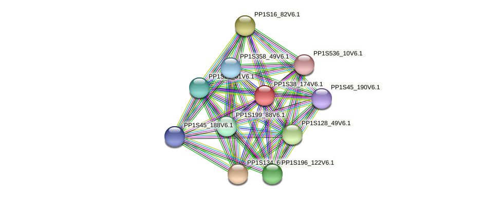 PP1S38_174V6.1 protein (Physcomitrella patens) - STRING interaction network
