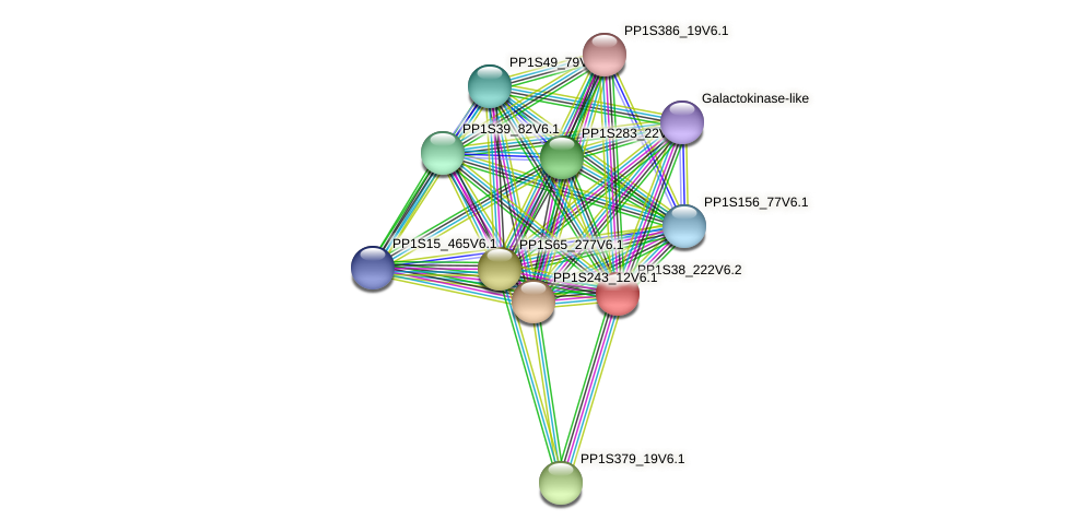 PP1S38_222V6.2 protein (Physcomitrella patens) - STRING interaction network