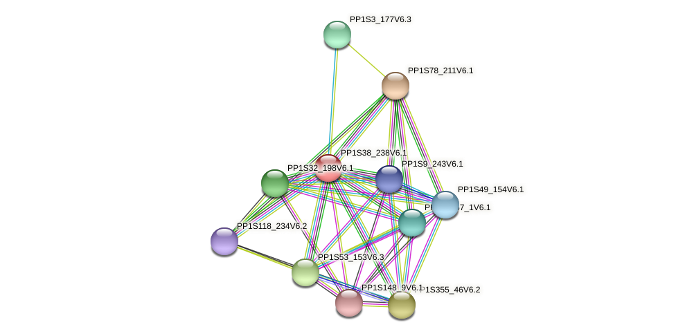 PP1S38_238V6.1 protein (Physcomitrella patens) - STRING interaction network