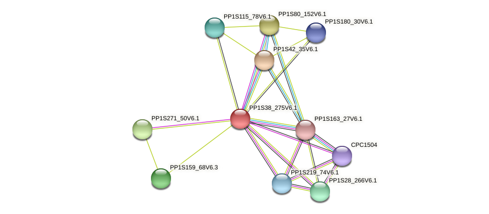 PP1S38_275V6.1 protein (Physcomitrella patens) - STRING interaction network