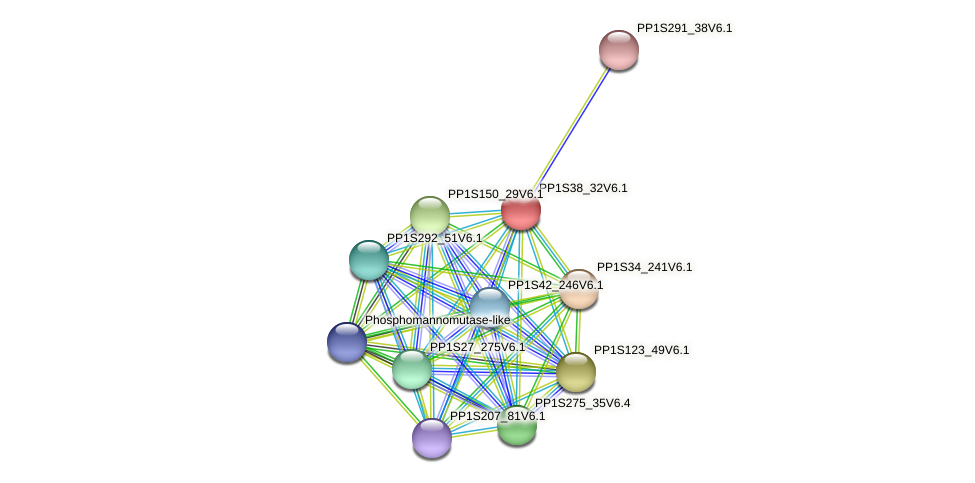 PP1S38_32V6.1 protein (Physcomitrella patens) - STRING interaction network