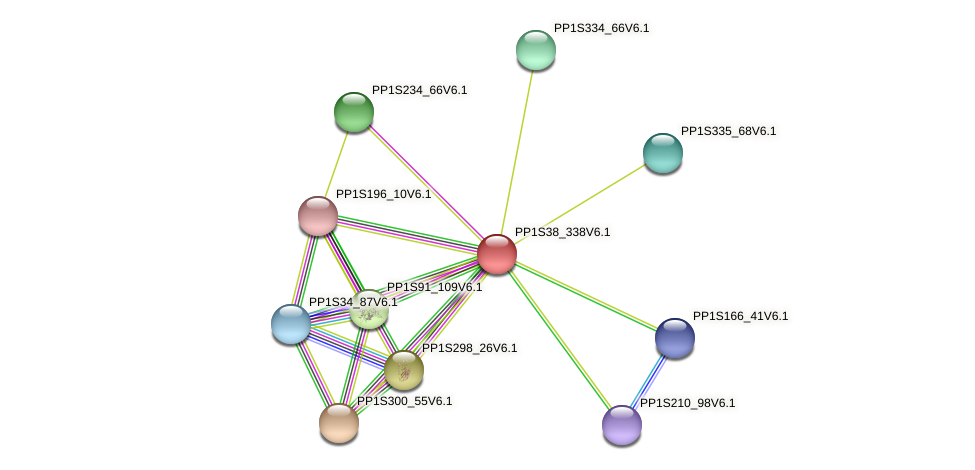 PP1S38_338V6.1 protein (Physcomitrella patens) - STRING interaction network