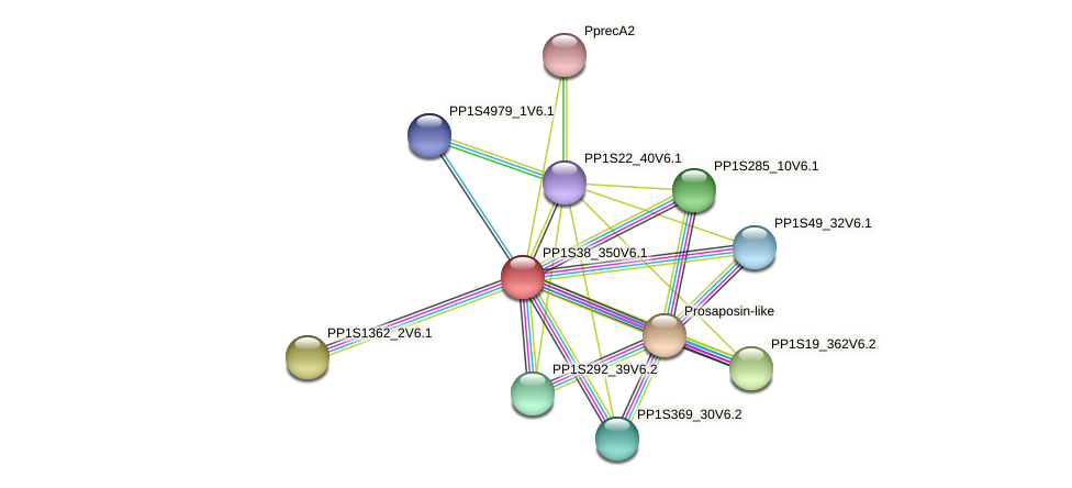 PP1S38_350V6.1 protein (Physcomitrella patens) - STRING interaction network