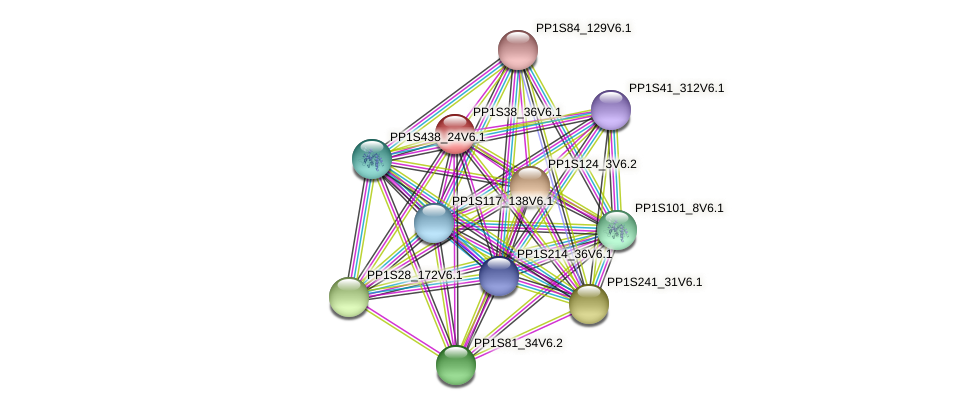 PP1S38_36V6.1 protein (Physcomitrella patens) - STRING interaction network