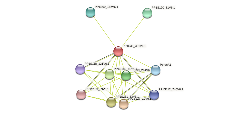 PP1S38_381V6.1 protein (Physcomitrella patens) - STRING interaction network