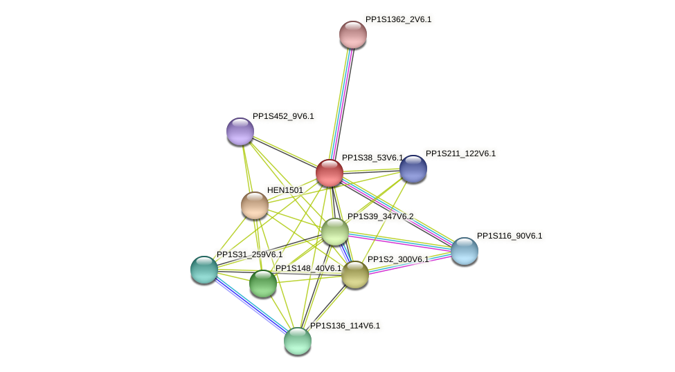 PP1S38_53V6.1 protein (Physcomitrella patens) - STRING interaction network