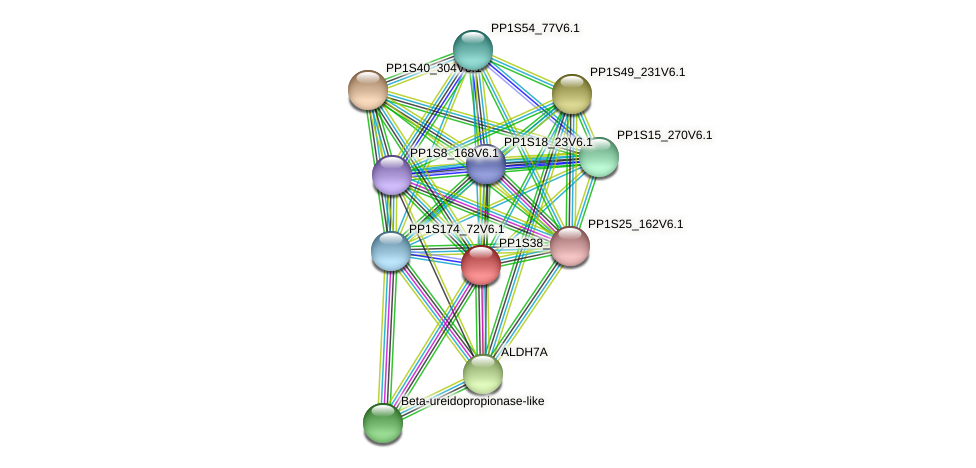 PP1S38_60V6.1 protein (Physcomitrella patens) - STRING interaction network
