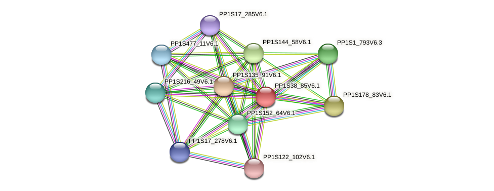 PP1S38_85V6.1 protein (Physcomitrella patens) - STRING interaction network