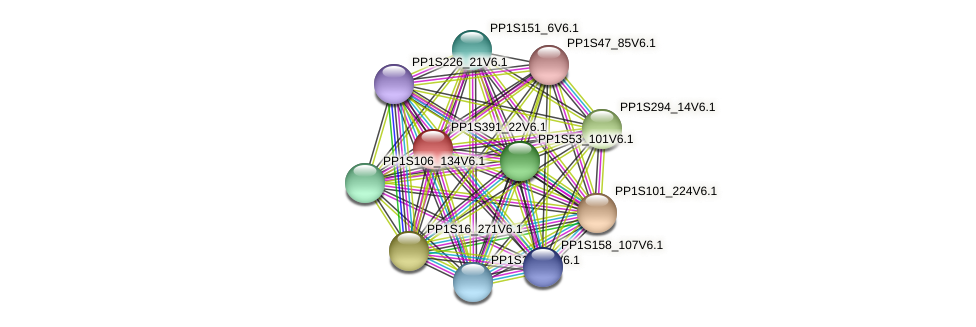 PP1S391_22V6.1 protein (Physcomitrella patens) - STRING interaction network