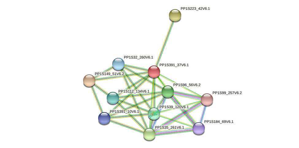 PP1S391_37V6.1 protein (Physcomitrella patens) - STRING interaction network