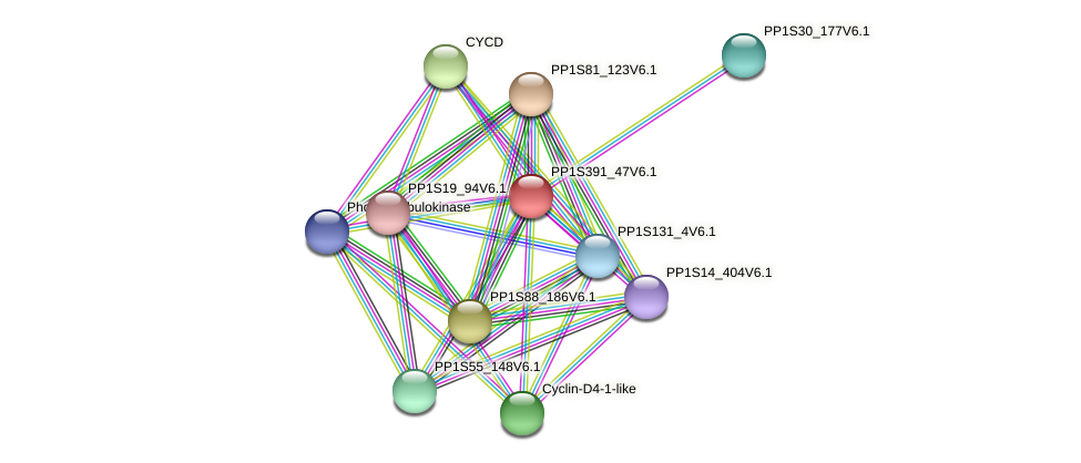 PP1S391_47V6.1 protein (Physcomitrella patens) - STRING interaction network