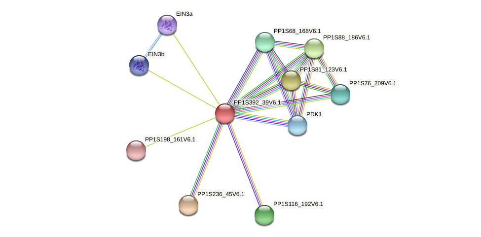 PP1S392_39V6.1 protein (Physcomitrella patens) - STRING interaction network