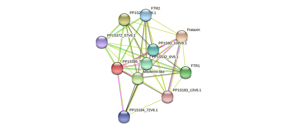 PP1S395_52V6.1 protein (Physcomitrella patens) - STRING interaction network