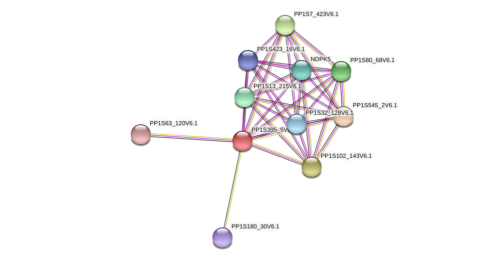 PP1S395_5V6.1 protein (Physcomitrella patens) - STRING interaction network