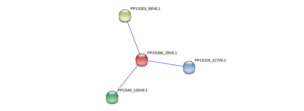 PP1S396_28V6.1 protein (Physcomitrella patens) - STRING interaction network