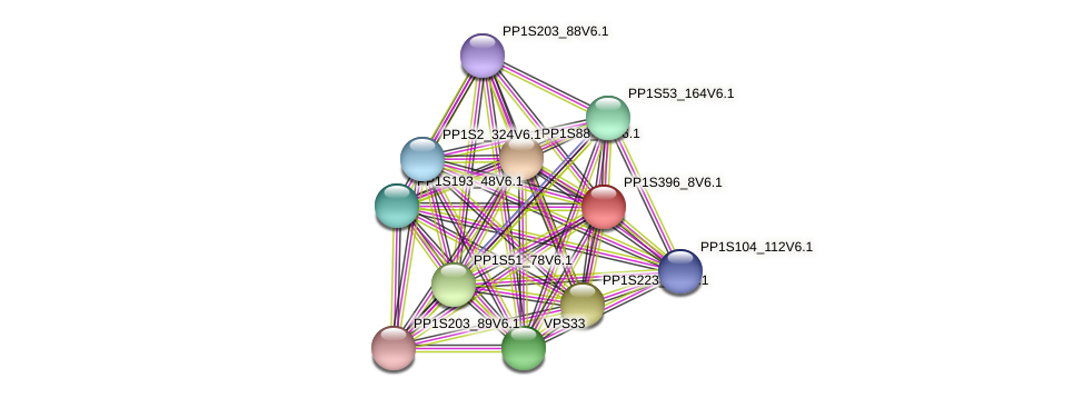 PP1S396_8V6.1 protein (Physcomitrella patens) - STRING interaction network