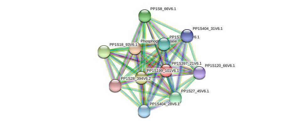 PP1S397_21V6.1 protein (Physcomitrella patens) - STRING interaction network