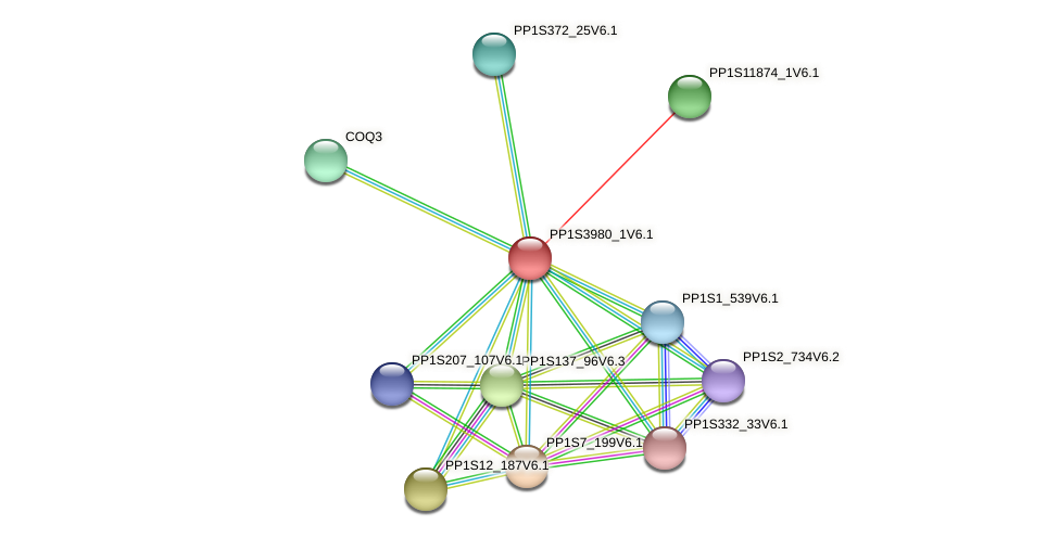 PP1S3980_1V6.1 protein (Physcomitrella patens) - STRING interaction network