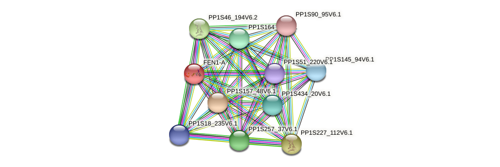 FEN1-A protein (Physcomitrella patens) - STRING interaction network