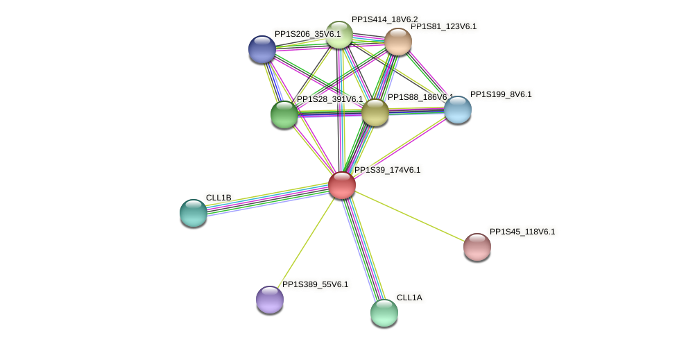 PP1S39_174V6.1 protein (Physcomitrella patens) - STRING interaction network