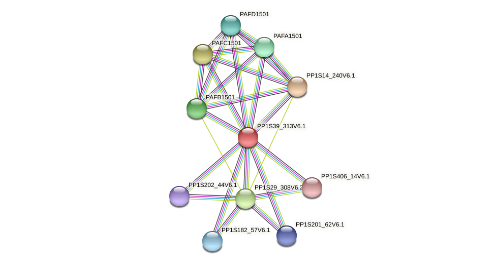 PP1S39_313V6.1 protein (Physcomitrella patens) - STRING interaction network