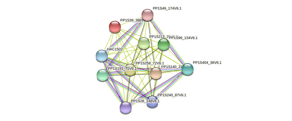 PP1S39_386V6.1 protein (Physcomitrella patens) - STRING interaction network