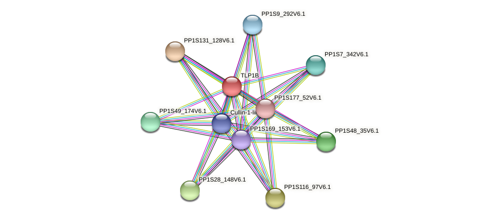 TLP1B protein (Physcomitrella patens) - STRING interaction network